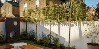 Row of pleached ornamental pear trees