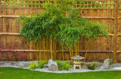 Photo of bamboo in Japanese garden