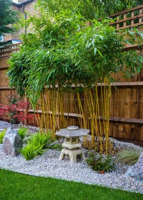 Photo of bamboo and stone lantern in Japanese garden