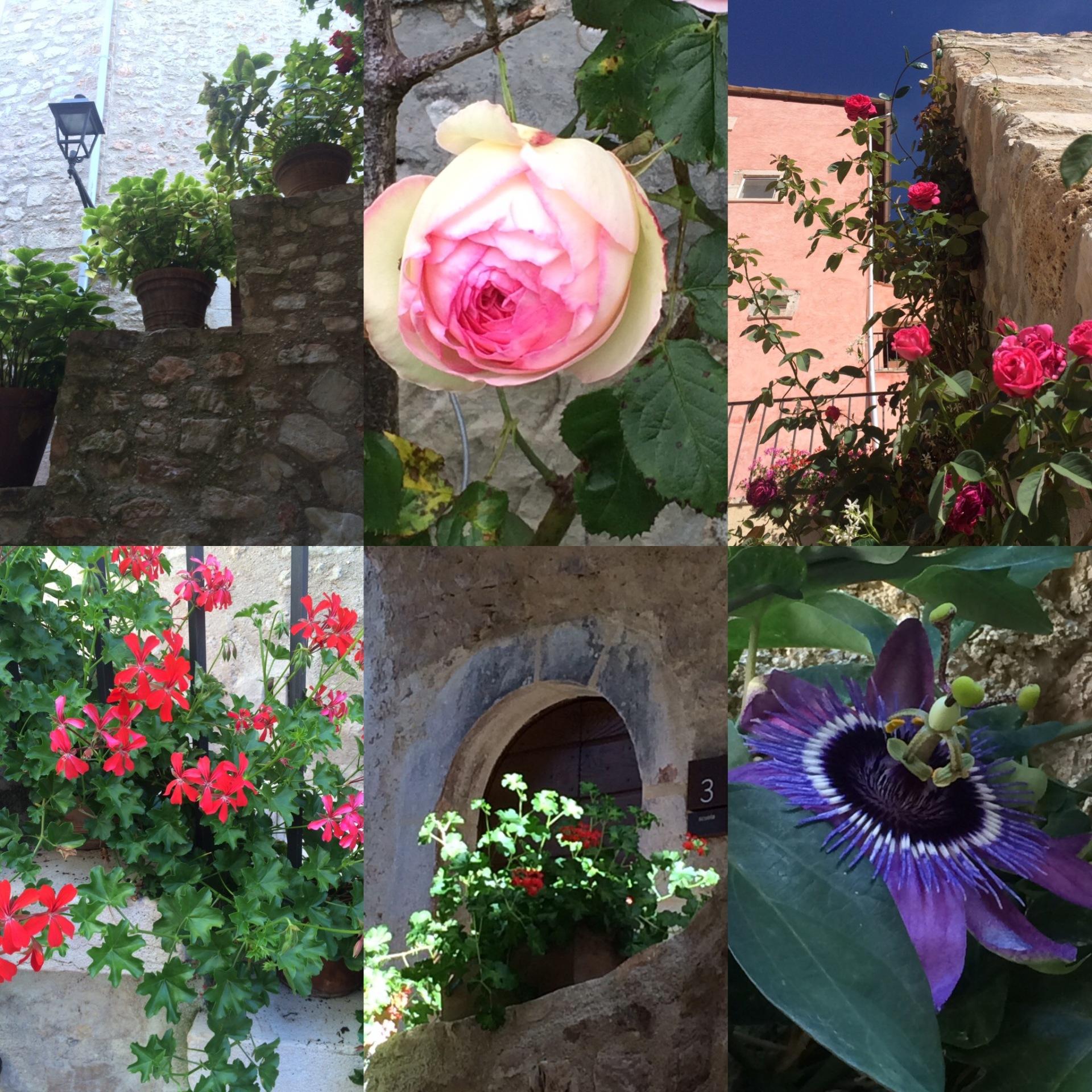 Postignano is beautifully planted