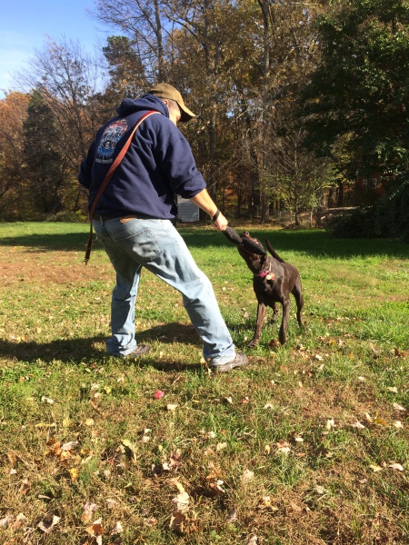 Using non food rewards in obedience training