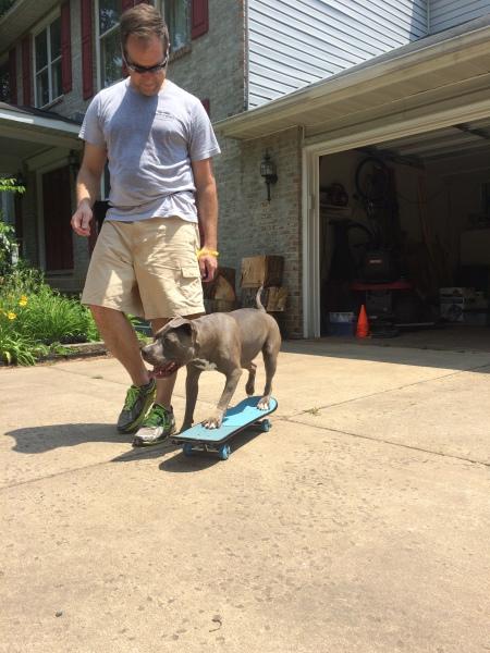 Olive the skateboarding pittbull!