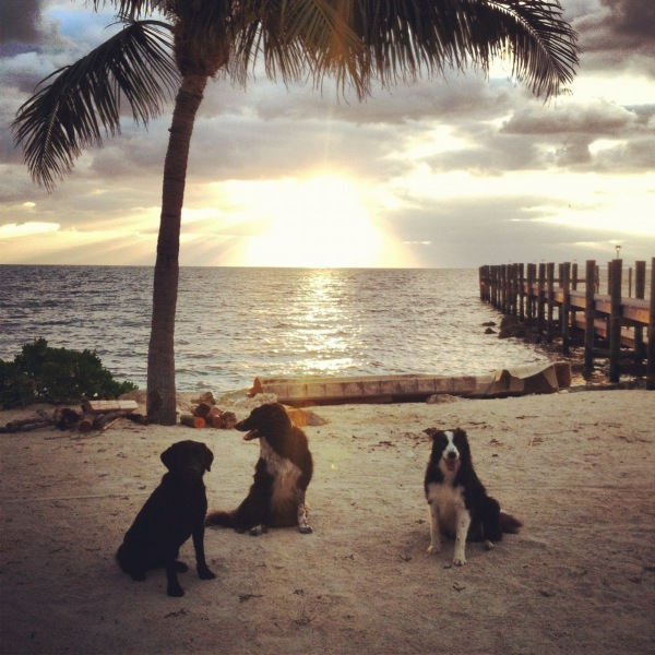 Obedience on the beach!