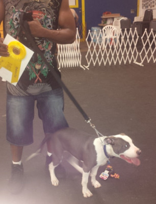 Pit Bull Obedience Training Class
