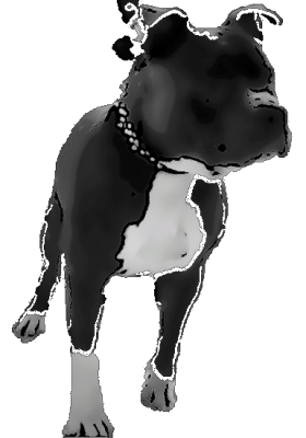Pack Of Pitts Blue Pit Bulls