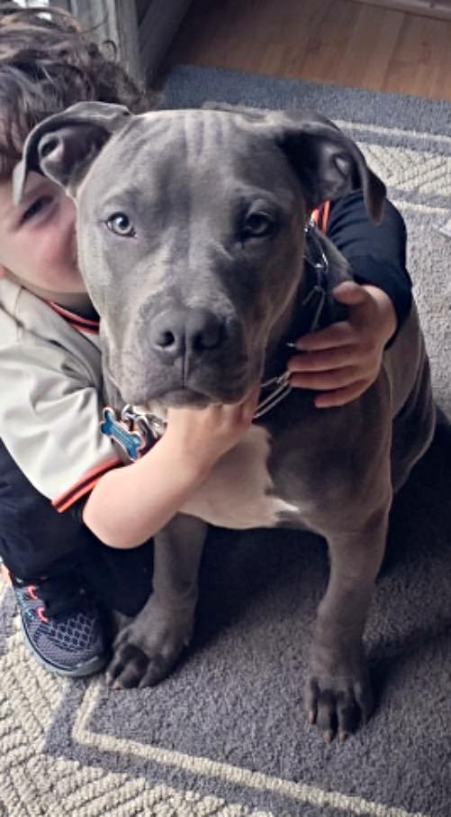 Blue Puppy 2016 Pack Litter