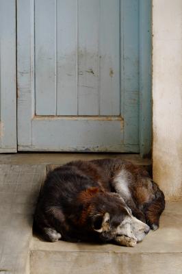 Sleeping dog, India