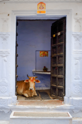 Make yourself at home, Udaipur India