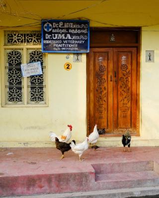 At the Vet's, Pondicheery India