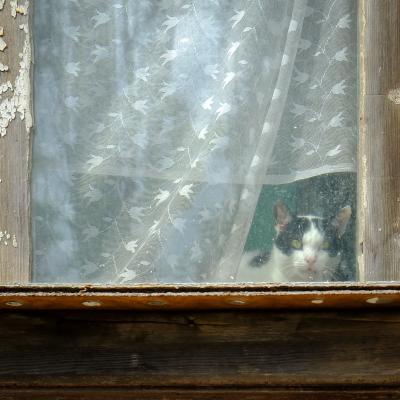 Cat in the window Gdansk Poland.