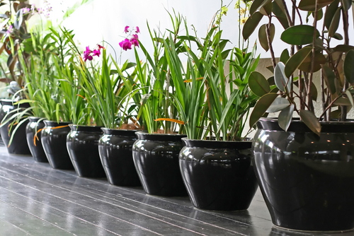 Indoor Planting Services Brooklyn