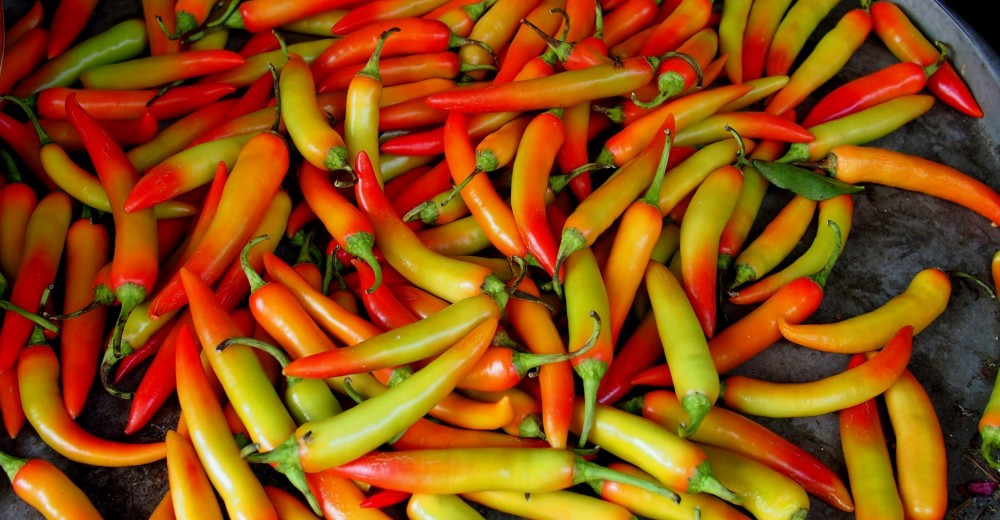 A brief history on the Chili Pepper