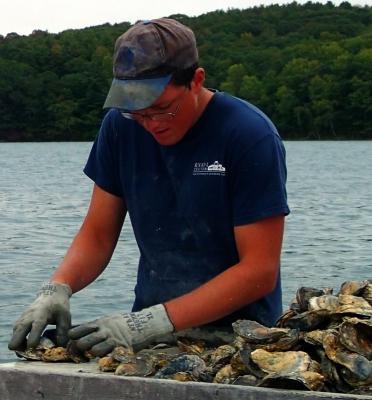Maine Oyster Farm
