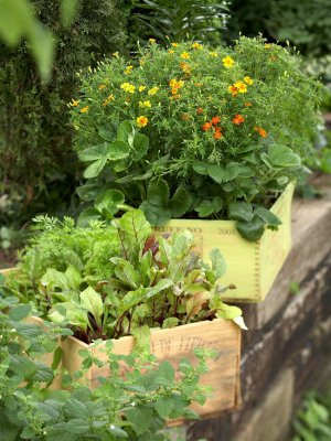 Planter Boxes / Herb Boxes