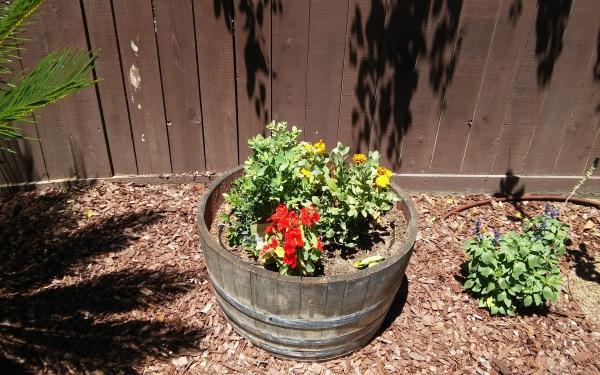 Whiskey Barrel Planting