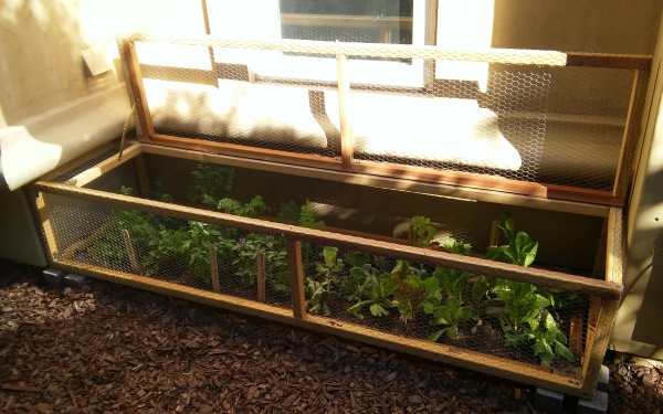 Lettuce and Herb Bar