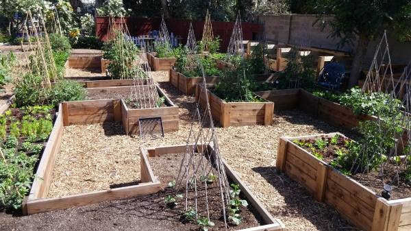 """Layout of our """"C"""" shaped keyhole raised bed"""