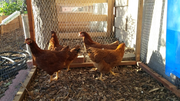 Just a few of our lovely ladies at the farm