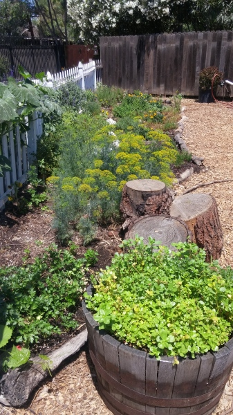 Restauration's herb beds
