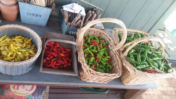Assortment of different Chillis