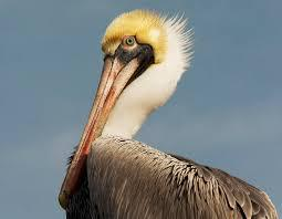 Happy Birthday to Pelican Island and the National Wildlife Refuge System