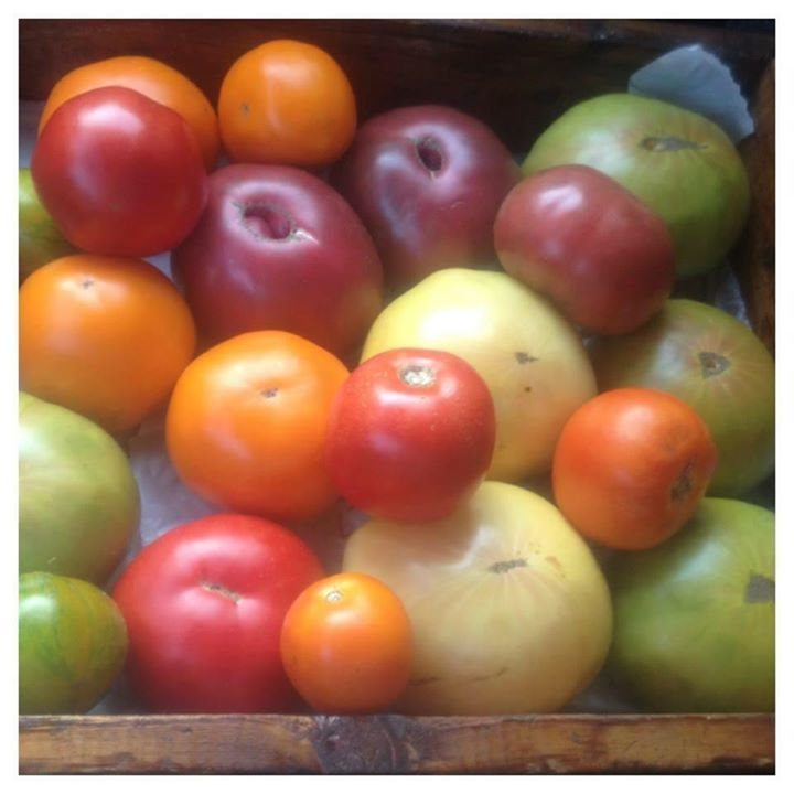 Heirlooms from our Greenhouse