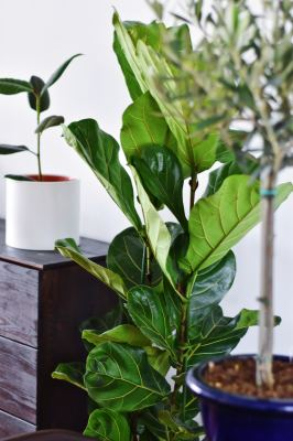 Beautiful House Plants That Clean The Air