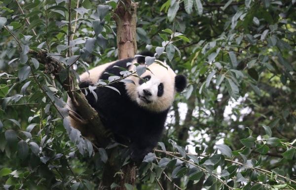 China Part 3 - The Panda Experience
