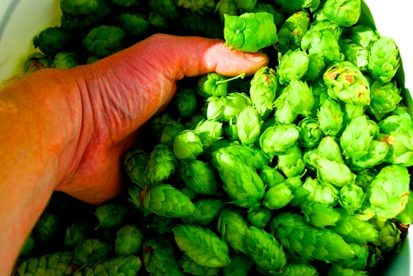 Suffusion to Saturation - The Golden Age of American Craft Beer