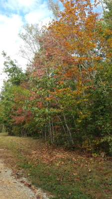 Will my breathtaking fall colors be destroyed by fire?