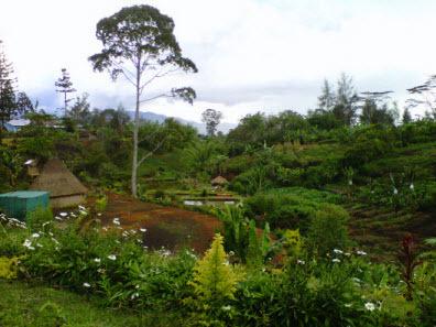 Lupa namanya, Hagen, PNG, Jan 2011