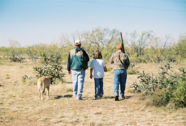 Quail hunting, Texans, Outdoors, Texans Outdoors, Texas,