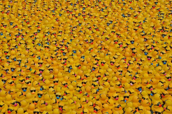Thousands of sponsored rubber ducks in preparation for the Duck Race