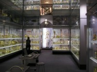 specimens at Hunterian Museum