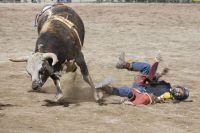 Bull riding at Angola Rodeo