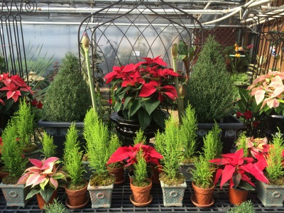 Wreaths, Roping, Trees, and Poinsettias