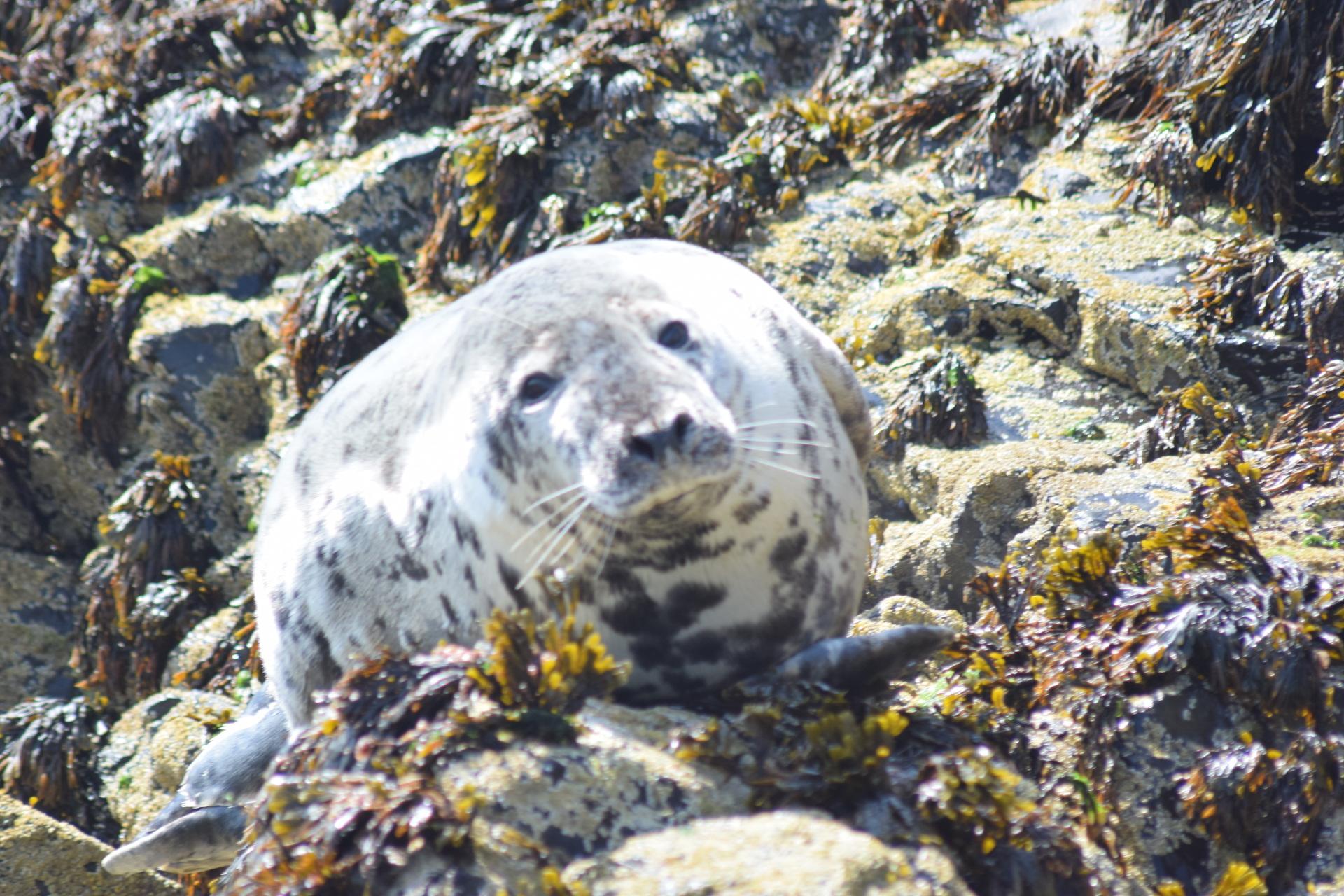 Seal Island Visit