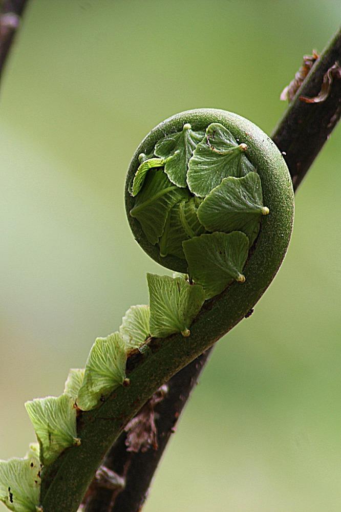 growing leaf, development, living, learning