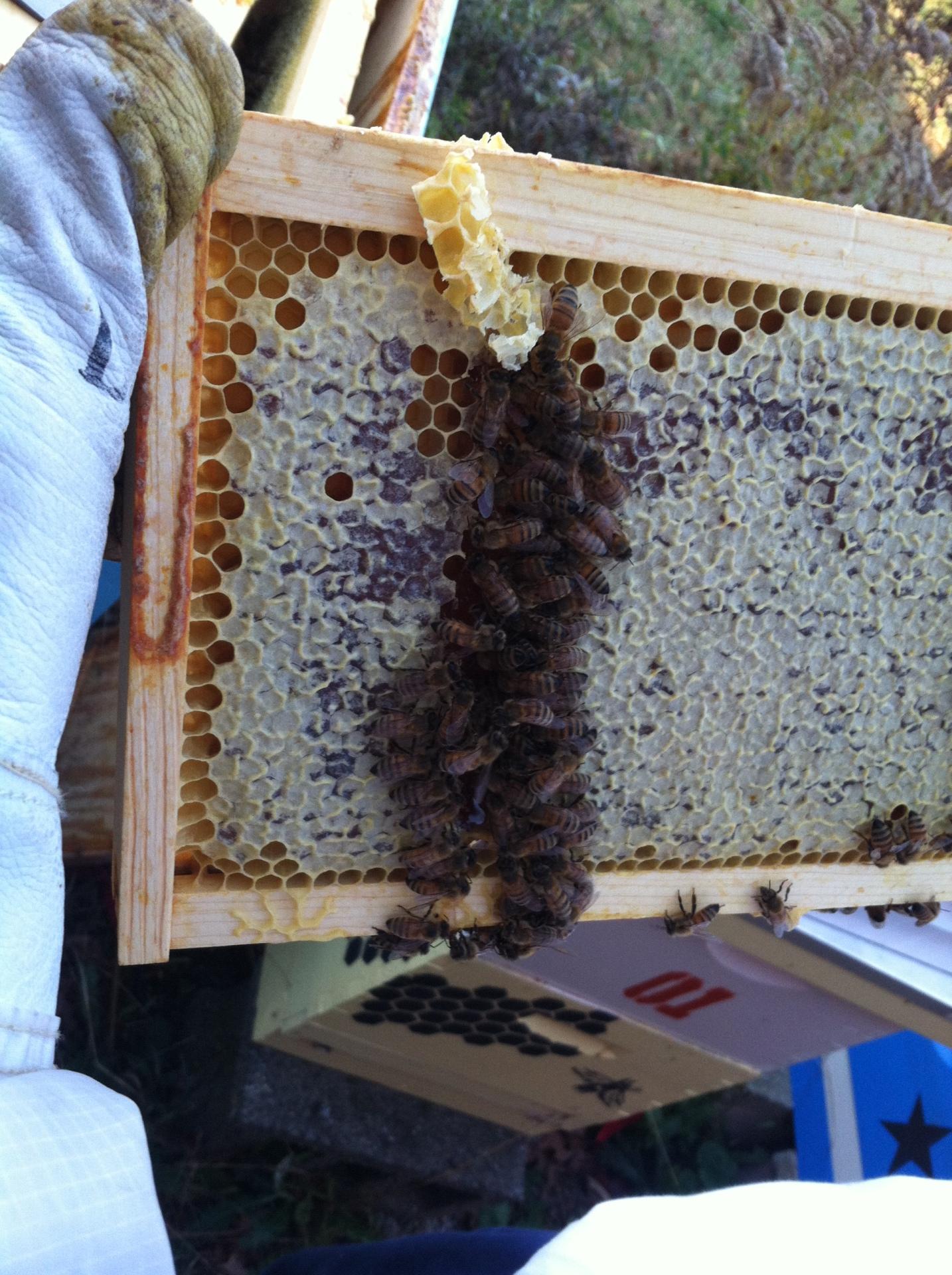 Eating Honey