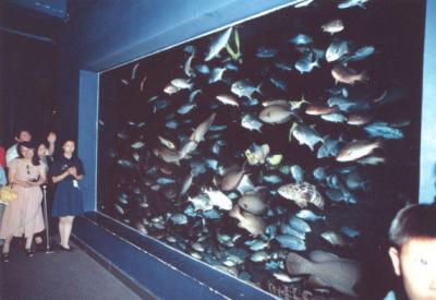 Nanjing Aquarium