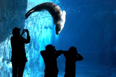 Taronga Zoo Leopard Seal Theatre