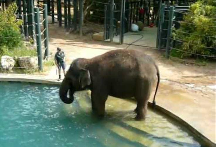 Perth Zoo Elephant Exhibit, Australia