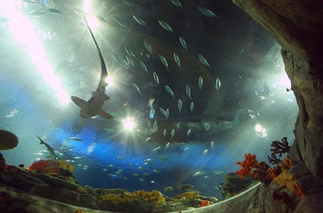 Ocean Park Grand Aquarium, Hong Kong