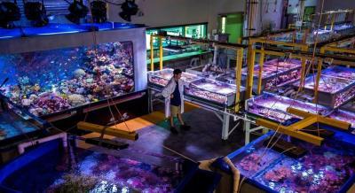 Australian Institute of Marine Science (AIMS) Seasim Laboratory, Australia