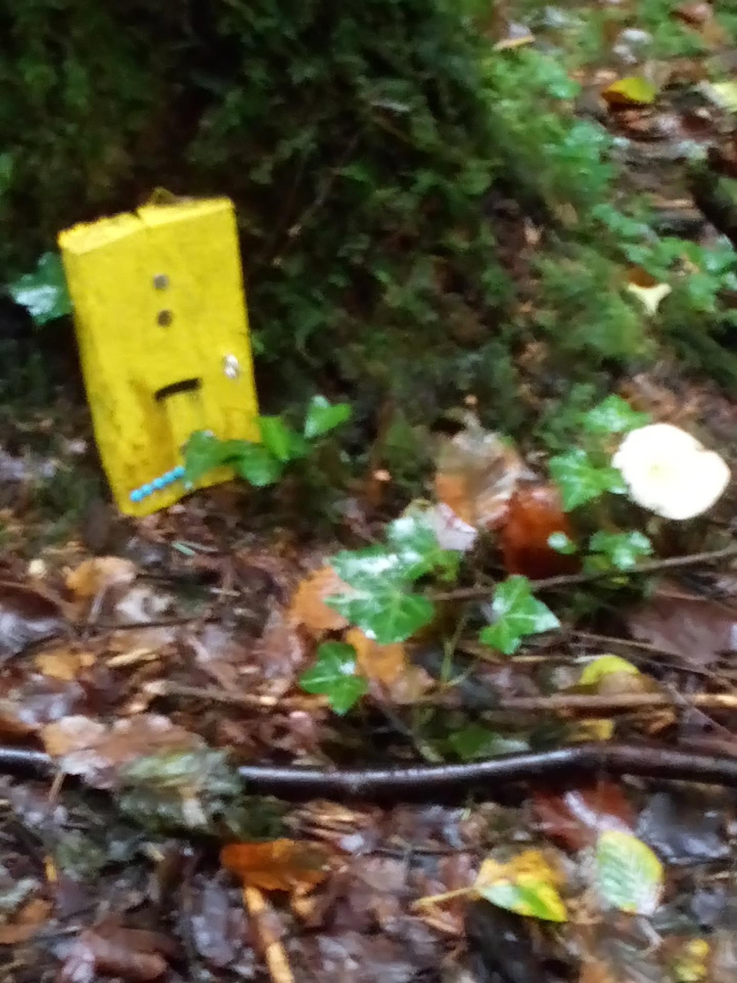 A Ramble Through A Fairy Forest
