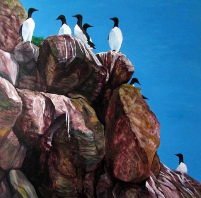 Witless Bay Murres