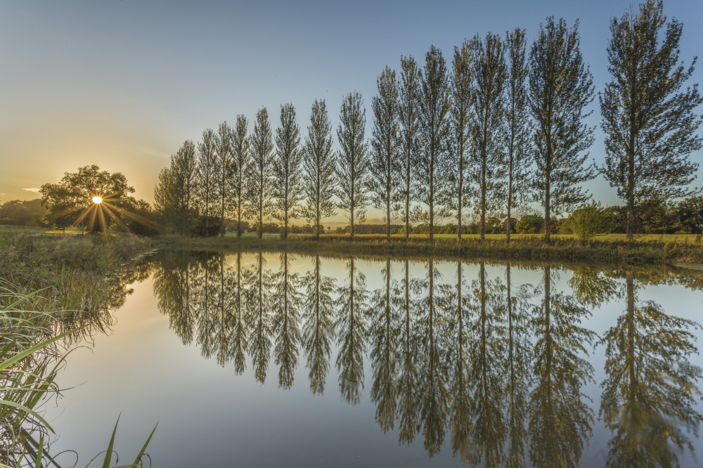 http://johncarsonsphotography.co.uk/belsay-pond