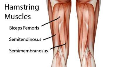 What Is the Best Exercise for the Hamstrings?