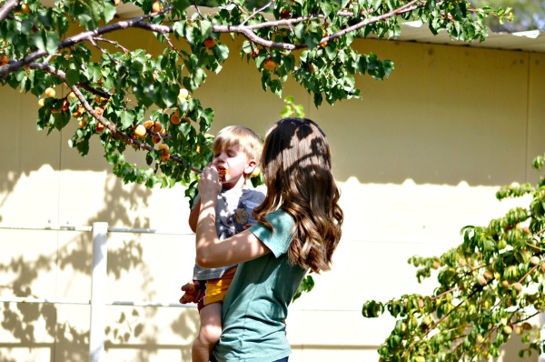 Apricot Picking in the Orchard and the Best Undershirt for AZ Summers