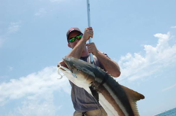 Cobia bucktail sightcasting Cape Lookout Harkers Island, NC